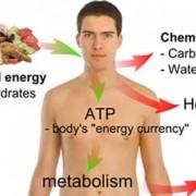 راههای افزایش متابولیسم و سوخت و ساز بدن