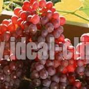 بهترین میوه ها و سبزیجات شهریور ماه