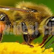 عسل و باکتری های مقاوم به آنتی بیوتیک